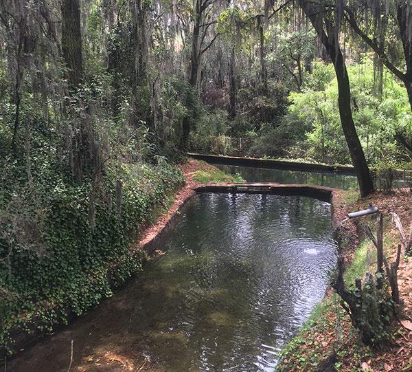 Las bondades del agua de manantial